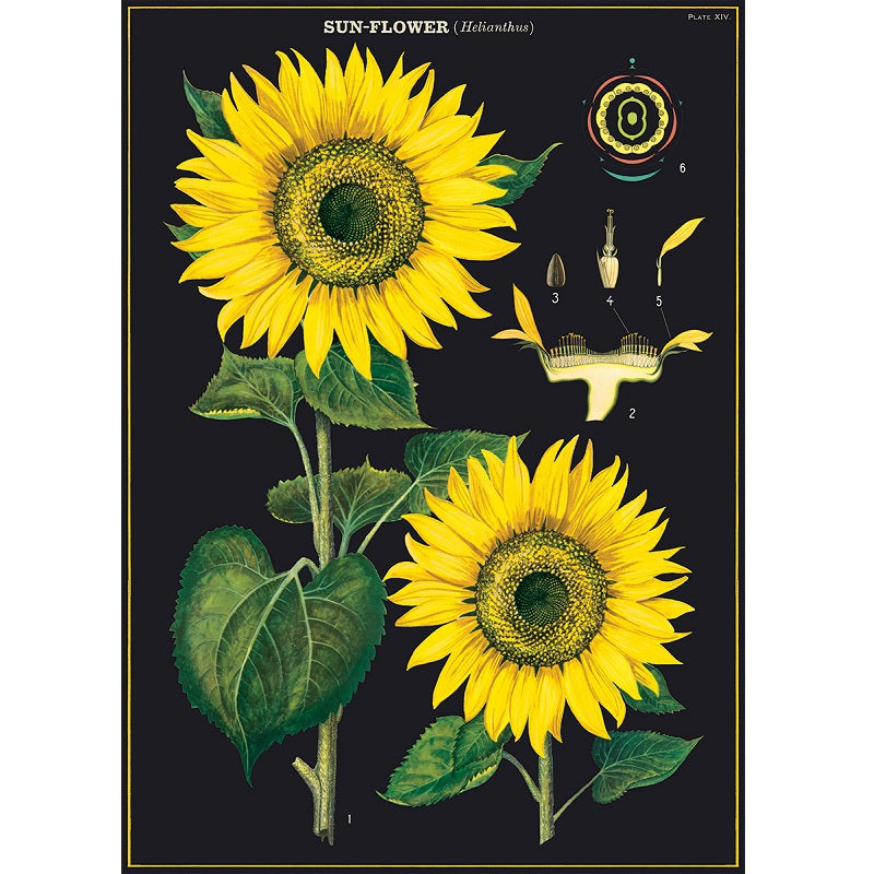 vintage-style poster - sunflower