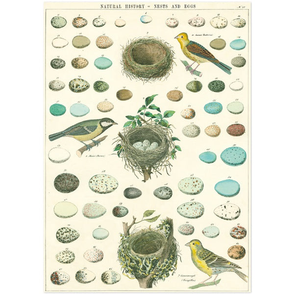 vintage-style poster - birds and nests