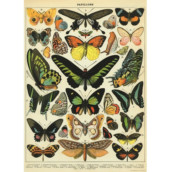 vintage-style poster - butterfly