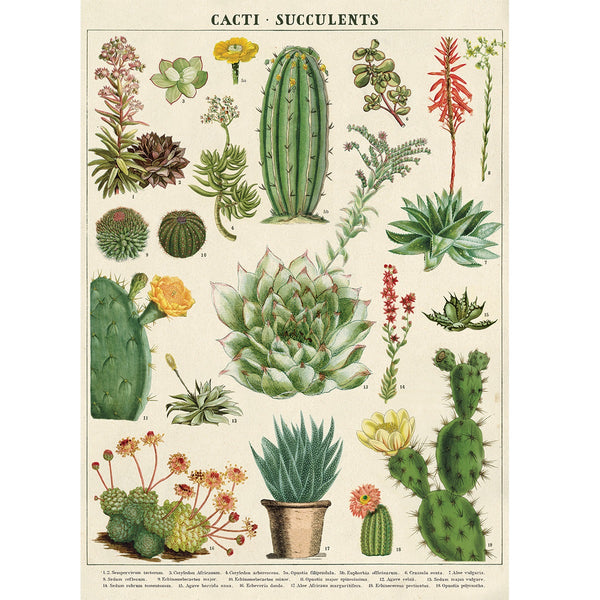 vintage-style poster - cacti
