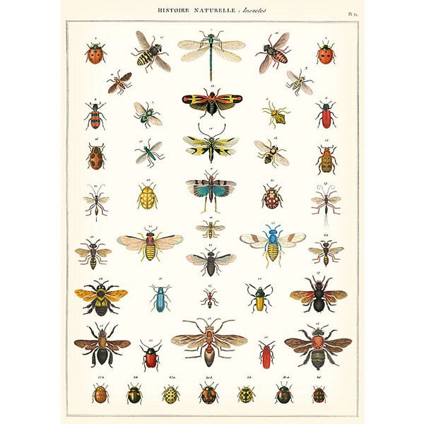 vintage-style poster - insect