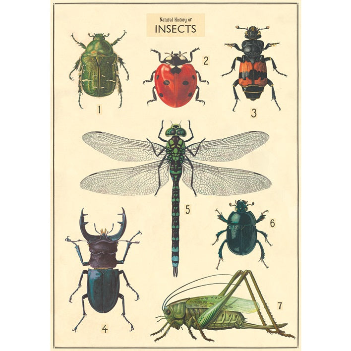 vintage-style poster - insects