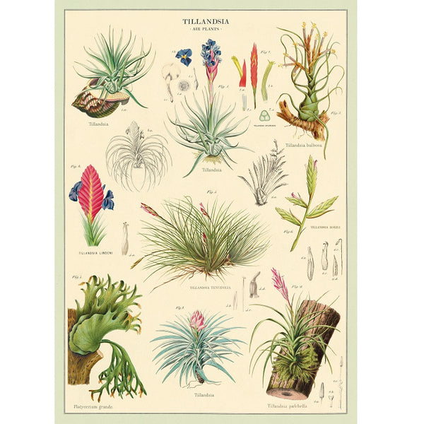vintage-style poster - air plants