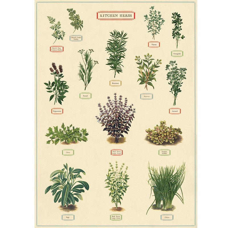 vintage-style poster - herbs