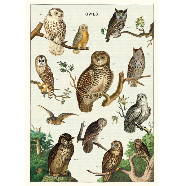 vintage-style poster - owls
