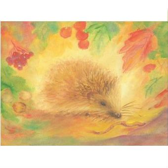 hedgehog postcard