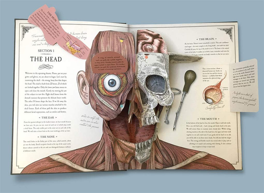 the human body; a pop-up guide to anatomy
