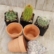 3- 2.5 inch cactus in terracotta pots - Planet Desert