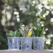 3 mini succulent gift wedding favors in glazed glass - Planet Desert