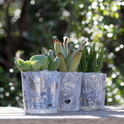6 mini succulent gift wedding favors in glazed glass - Planet Desert