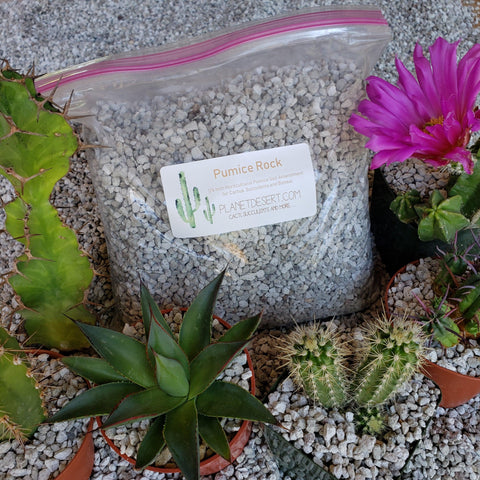 1 LB-1/4 Horticultural cactus Succulent Bonsai Pumice Soil Amendment top dressing