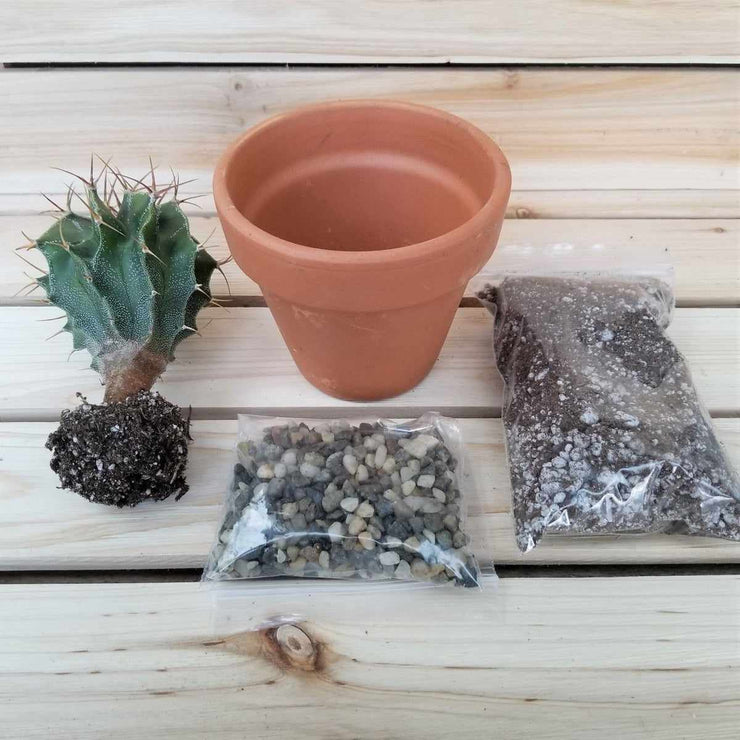 "DIY Cactus terracotta 3.5"" pot kit - Planet Desert"