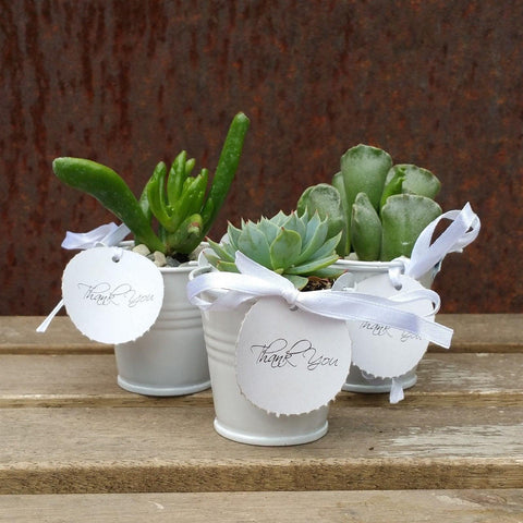 3 mini succulents in tin pails wedding or party favor arrangements set white - Planet Desert