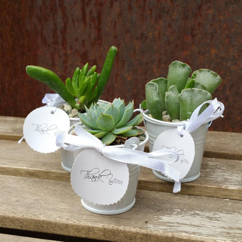 6 mini succulents in tin pails set party favor arrangements white