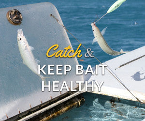 Catch and Keep Bait Healthy