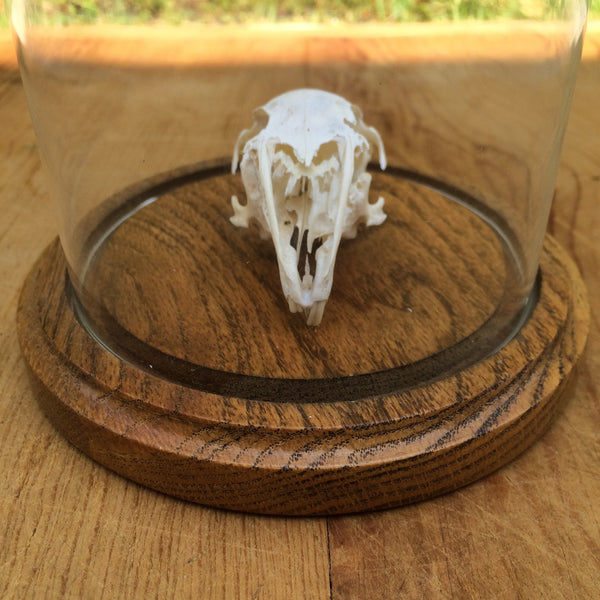skull under glass dome