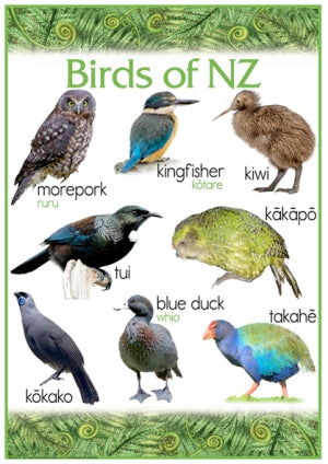 Birds of NZ (2 charts)