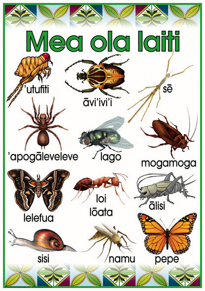 Samoan Insects