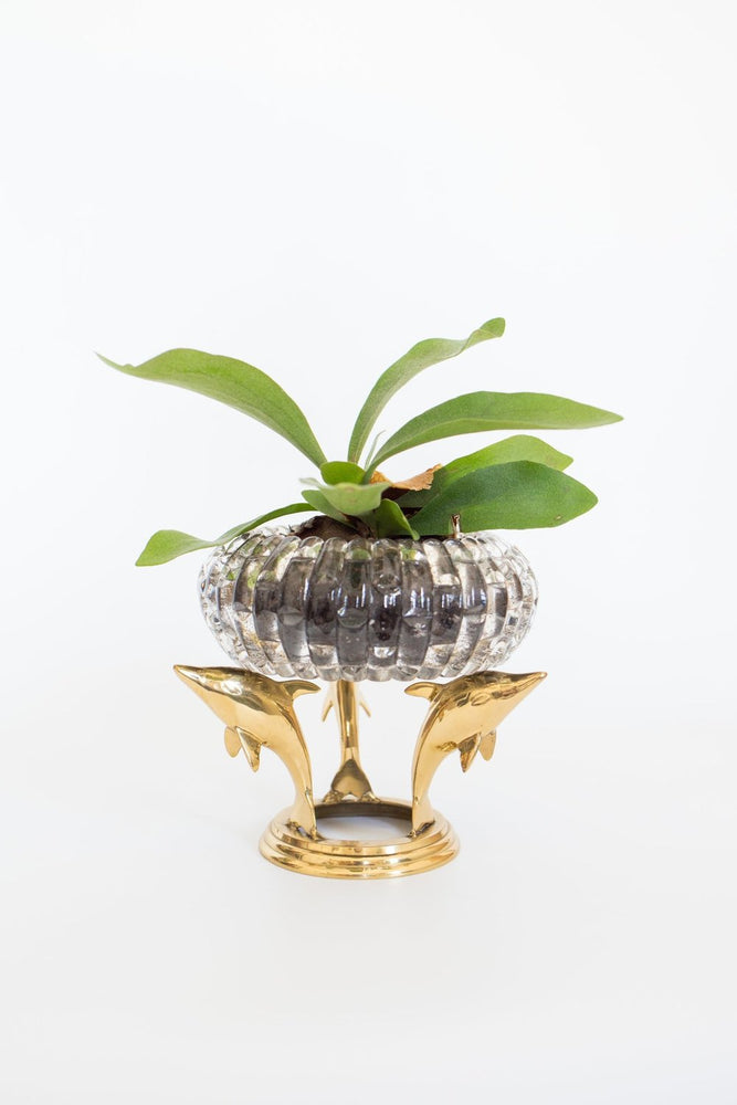 Brass Dolphin Plant Stand