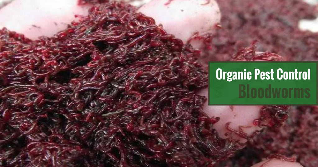 Greenhouse Gardening Organic Pest Control - Bloodworms