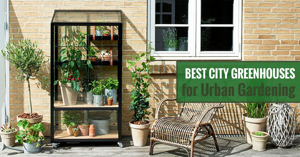 Best city greenhouses for urban gardening
