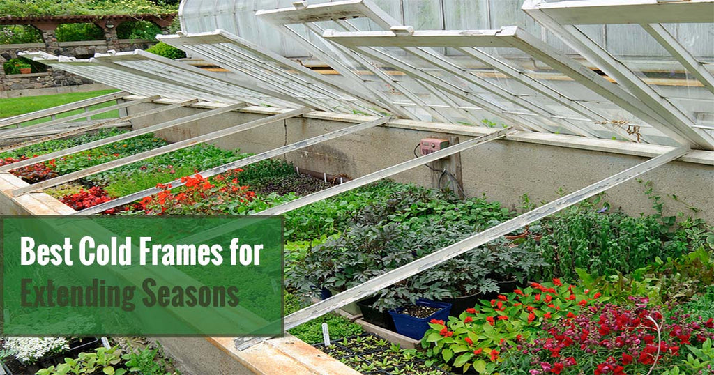 The Best Cold Frames for Extending Seasons & Year-Round Gardening
