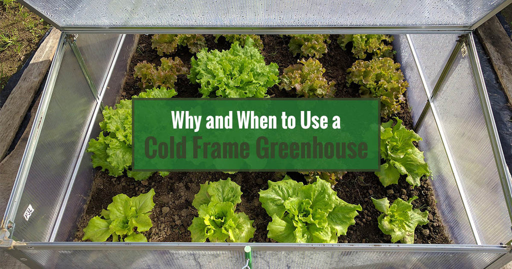 Why and When to Use a Cold Frame Greenhouse