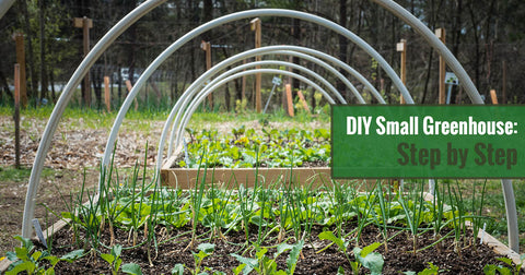 DIY Small Greenhouse: Step by Step