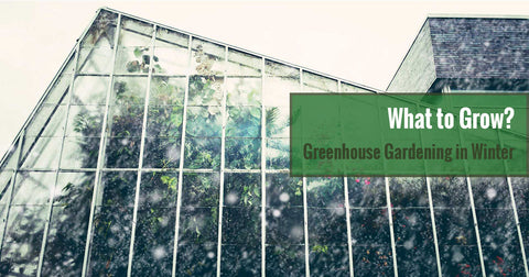 Greenhouse Gardening in Winter: What Plants To Grow in the Cold Season?