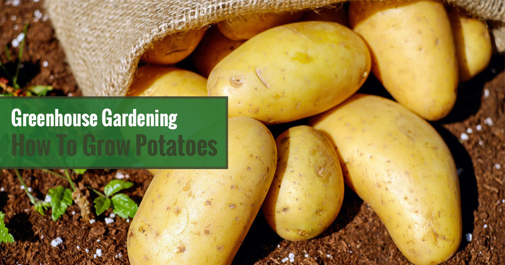 Greenhouse Gardening How To Grow Potatoes Greenhouse