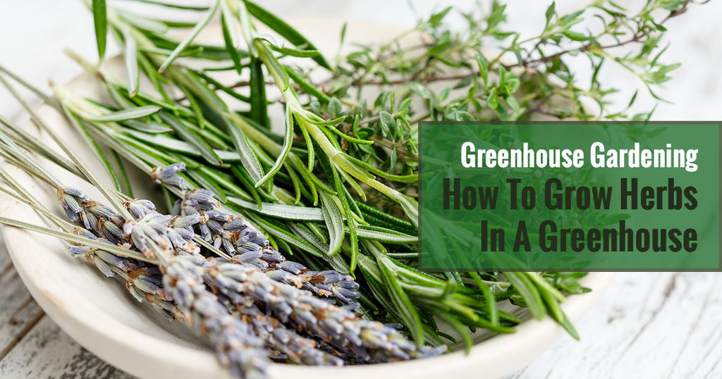 How To Grow Herbs in a Greenhouse