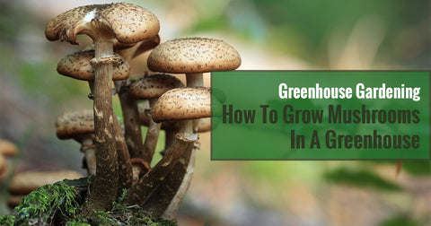 Greenhouse Gardening - How To Grow Mushrooms