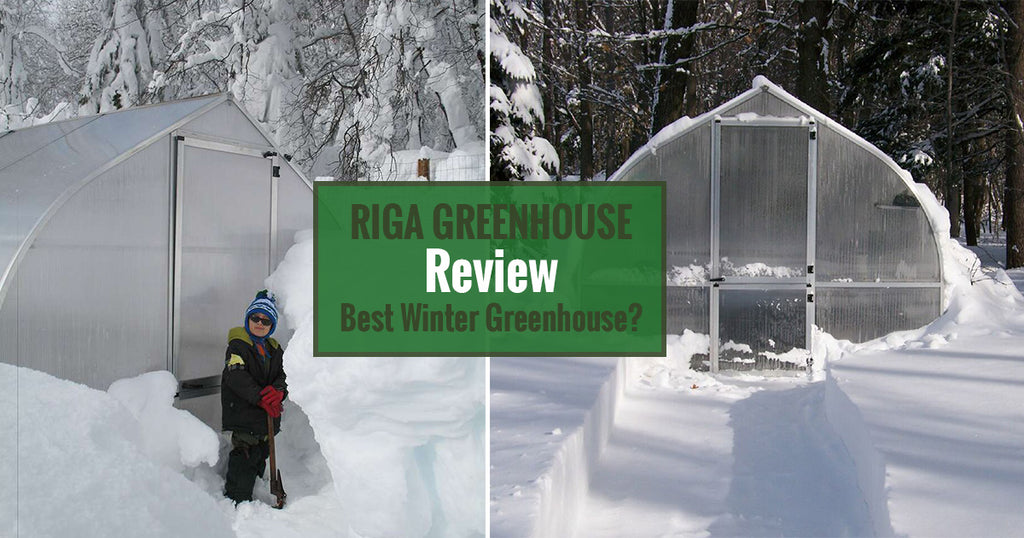 Riga Greenhouse Review - Is It The Best Winter Greenhouse?