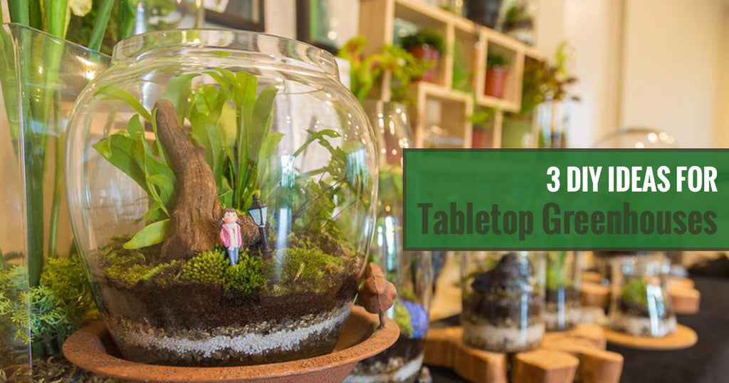 3 DIY Tabletop Greenhouse Ideas