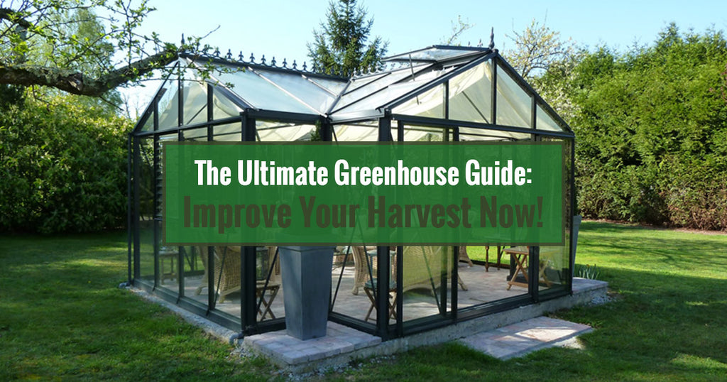 The Ultimate Greenhouse Guide: Improve Your Harvest Now!