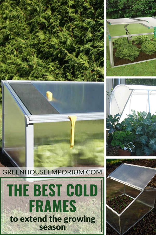 Varieties of plants and flowers inside open cold frames with the text: Best Cold Frames for Extending Seasons.