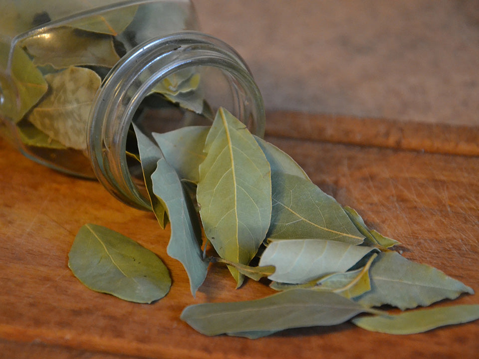 Dried Bay Laurel Leaves from a Jar