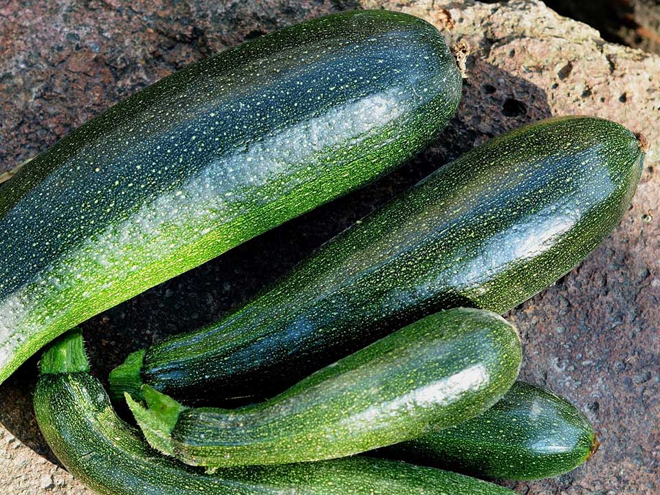 Four pieces of Courgettes laid on a ground