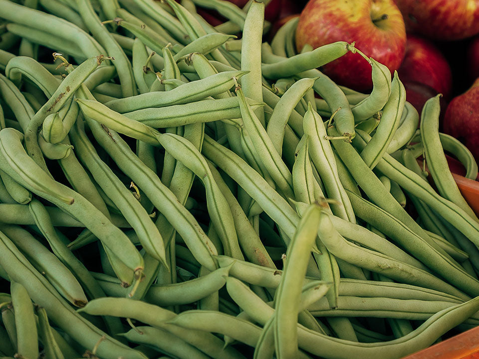 Harvested French Beans