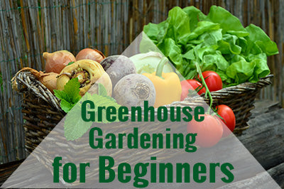 Vegetables in a basket with text: Greenhouse Gardening for Beginners