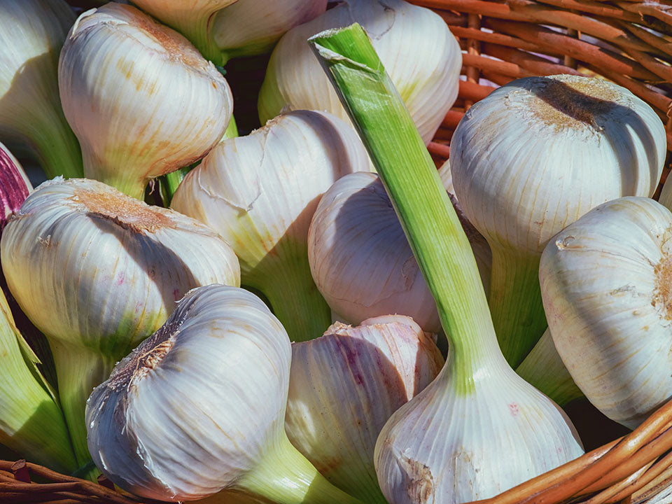 Garlic bulbs in a basket