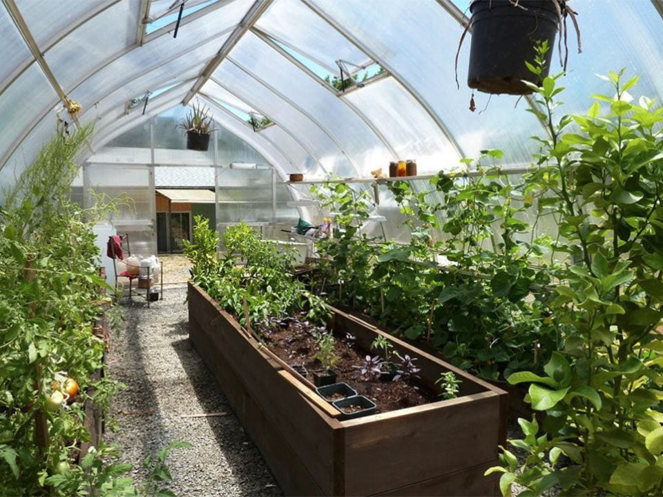 Hoklartherm Riga XL 5 Greenhouse interior view with plants inside