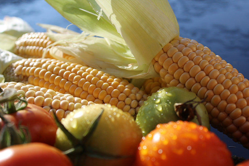 Sweet corn cob with tomatoes