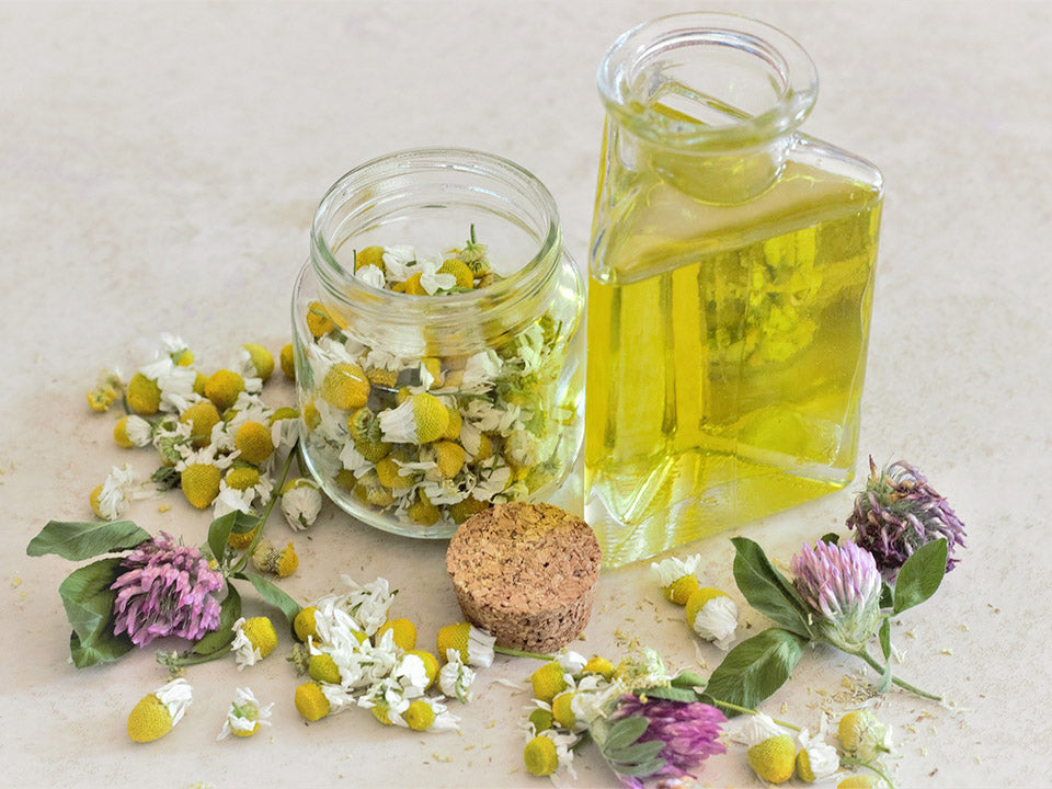 A bottle of chamomile oil and a jar or chamomile flowers that have been grown in a greenhouse