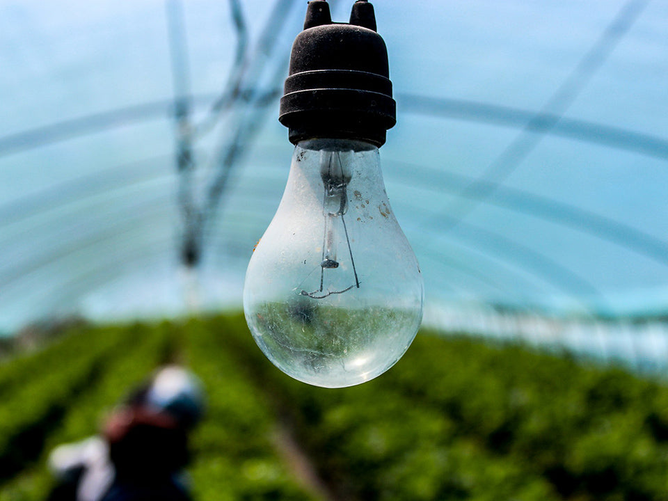 Incandescent Light Bulb Used in a Greenhouse