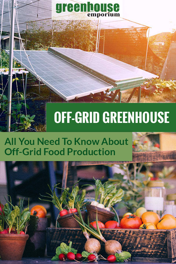 Solar panels installed on a greenhouse are shown on the upper part. Harvested crops below. The text in the middle says Off-grid Greenhouse All You Need To Know About Off-grid Food Production.