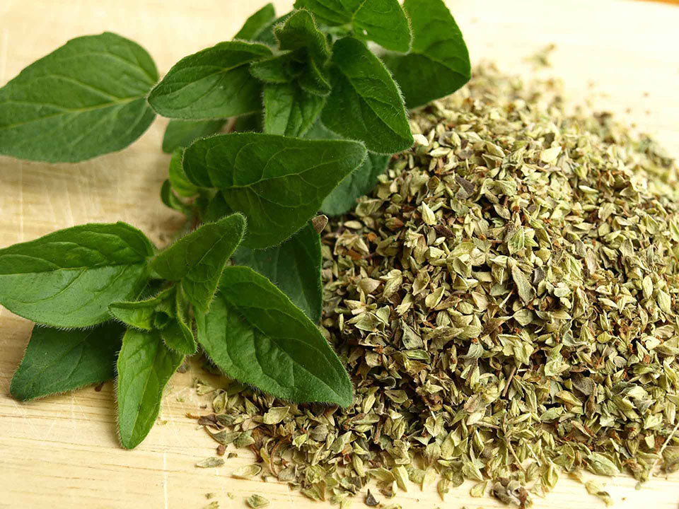 Fresh and dried oregano leaves