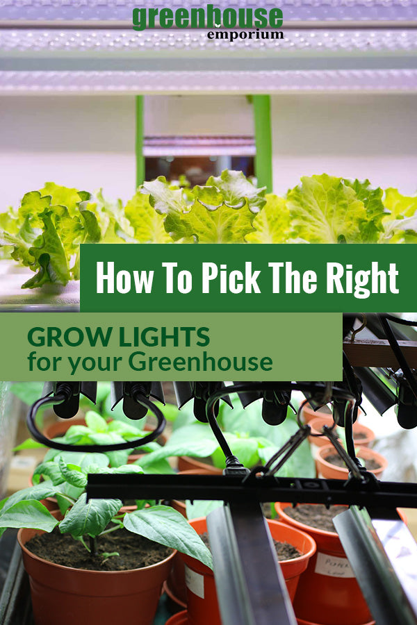 Grow Lights above plants with the text: How to pick the right Grow Lights for your Greenhouse