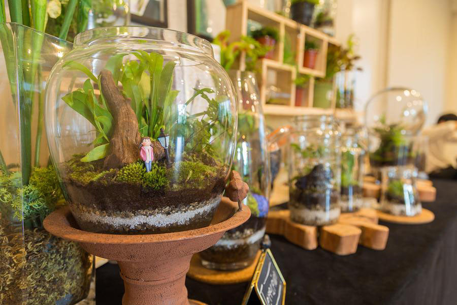 Aquarium as a tabletop greenhouse for your house