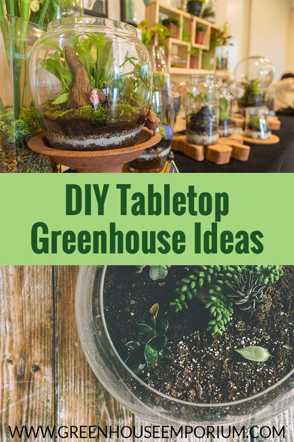 DIY Tabletop Greenhouses made from fish bowls